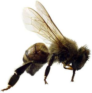 Killer Bees & Your Job Search